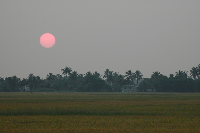 Sun setting over a field on the backwaters of Kerala