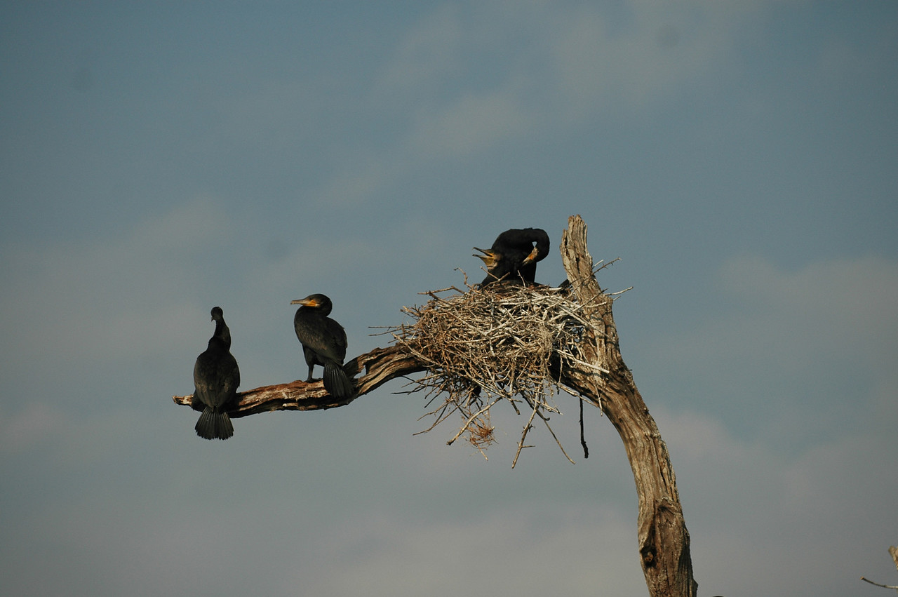 Birds in the Periyar Wildlife Preserve