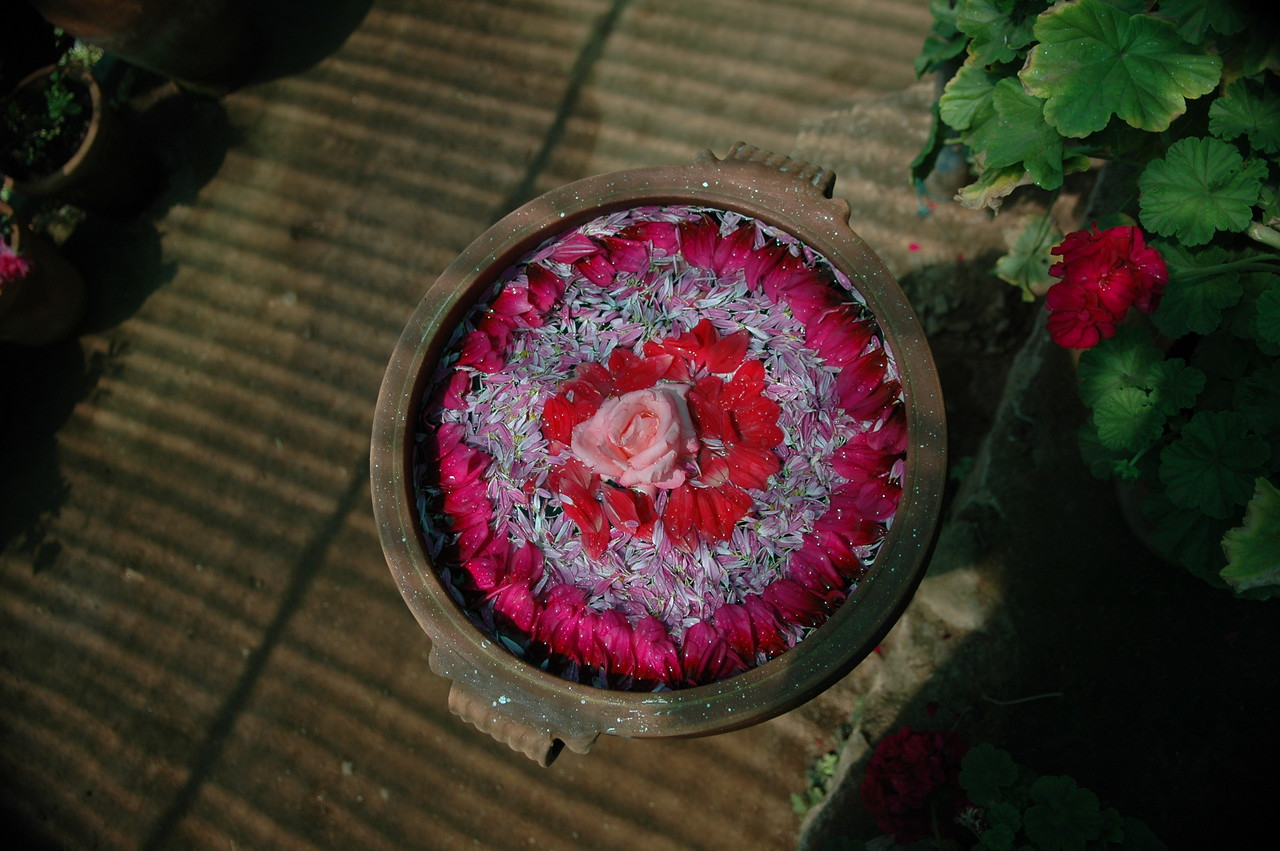 Flower petals in a bird bath at a flower garden near Munnar