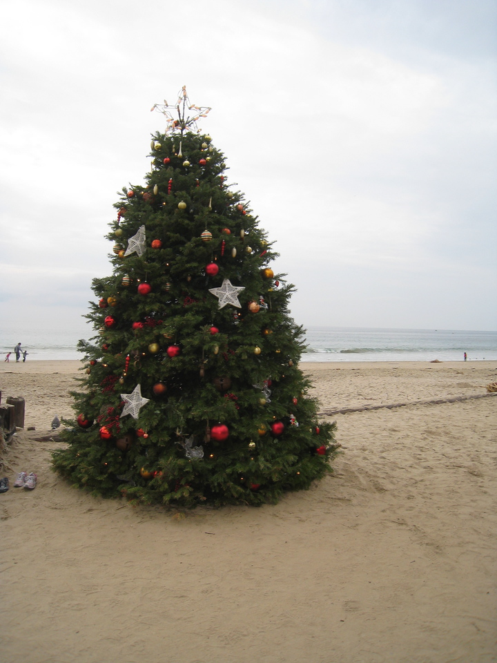 Christmas tree on the beach.