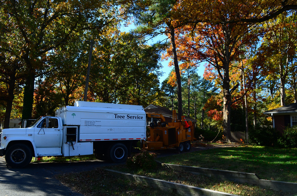 11/9 tree service working on the tree in the side yard.
