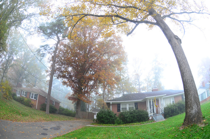 11/9 before picture of the tree by the house in the side yard.