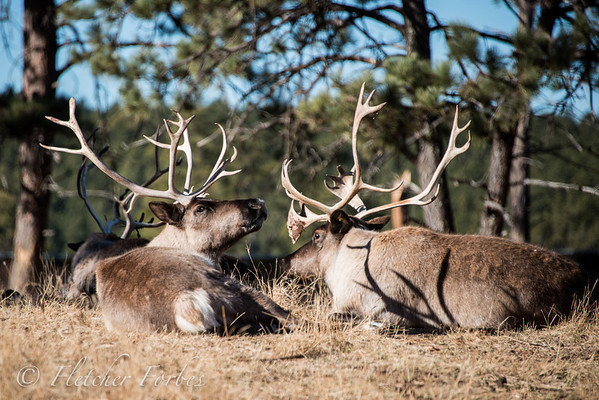 All the animal photos are from a preserve in the Black Hills of South Dakota.