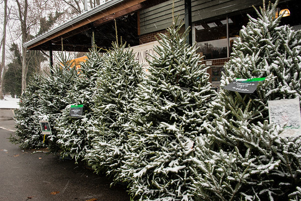 Christmas trees are already flocked! A portent of weather to come.