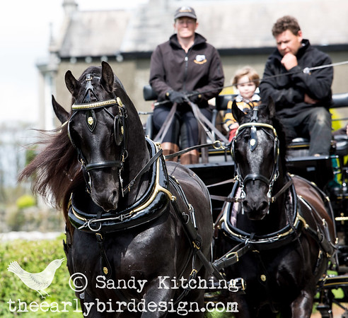 Black Horses Carriages 2014
