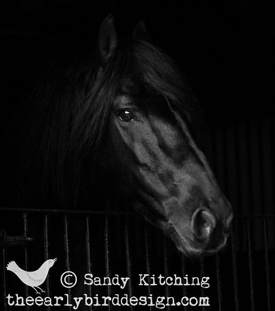 Black Horses in Monochrome 2014