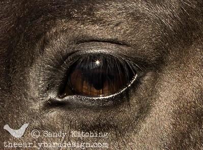 Hoitze's eye