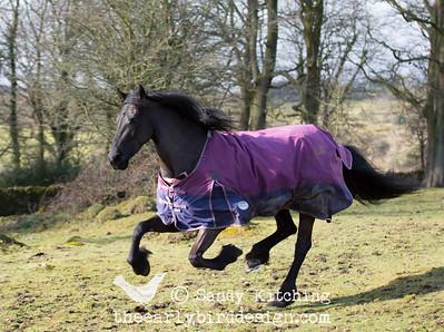 Black Horses Femma Feb 2015