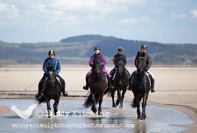 Friesian Beach Experience 4 horses Apr 2015