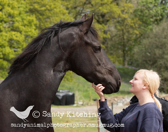 Friesians & Boxer dogs May 2015