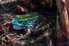Blue Frog 7/1/2014