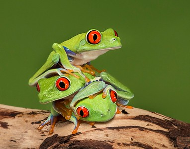 Frogscapes035_Cuchara_7925d_071513_160555_5DM3L