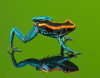 Frogscapes030_Cuchara_4232_042014_084137_5DM3L