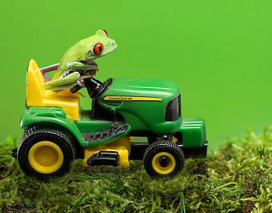 Frogscapes042_Cuchara_4500cAM_070613_180657_5DM3L