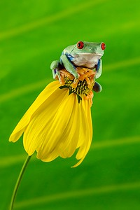 Frogscapes100_Cuchara_5552b_083112_160335_5DM3L