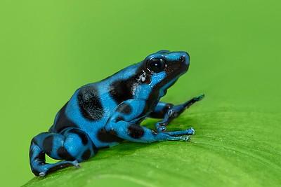Frogscapes023_Cuchara_5632b_062514_200617_5DM3L
