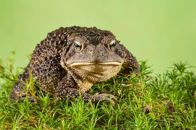 Frogscapes054_Cuchara_3217_080113_002455_5DM3L