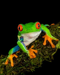 Frogscapes003_Cuchara_0008b_121116_193521_5DM3L