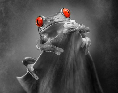 Frogscapes098_Cuchara_5402g2_020614_001625_5DM3L