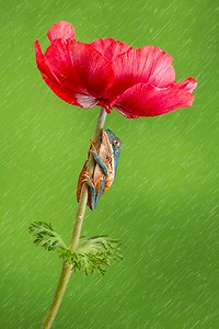 Frogscapes016_Cuchara_5186d_050314_144424_5DM3L