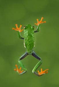 Frogscapes012_Cuchara_9813-45_121116_191328_5DM3L