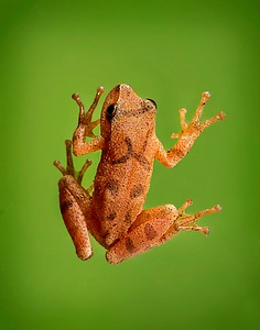Frogscapes009_Cuchara_7415f_071513_144233_5DM3L