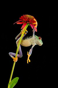 Frogscapes001_Cuchara_2598_081712_195229_5DM3L