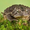 Frogscapes052_Cuchara_3194_080113_002112_5DM3L