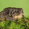 Frogscapes053_Cuchara_3206_080113_002309_5DM3L