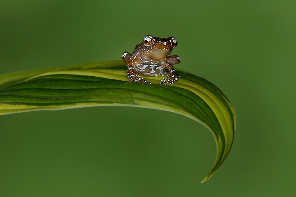 Frogscapes195_Cuchara_4840_062414_115030_5DM3L