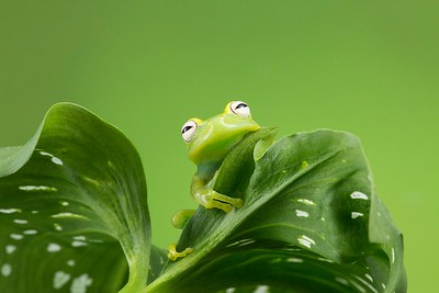 Frogscapes101_Cuchara_5595_052014_112309_5DM3L