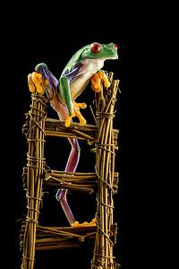 Frogscapes177_Cuchara_2253c_081712_191145_5DM3L