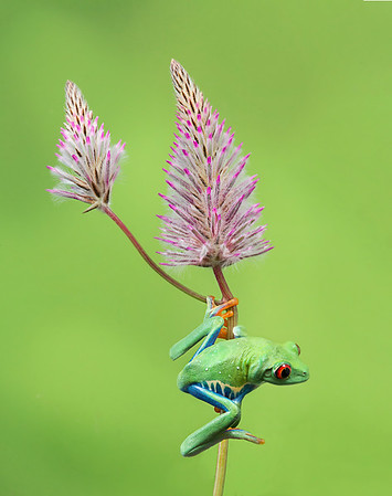Frogscapes191_Cuchara_1458_053014_123904_5DM3L
