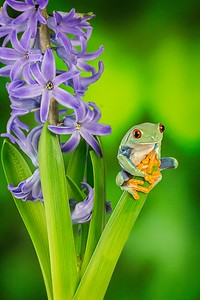 Frogscapes172_Cuchara_2708_011913_172635_5DM3L