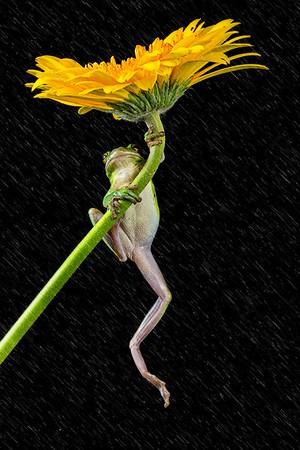 Frogscapes128_Cuchara_6243b_120316_163403_5DM3L