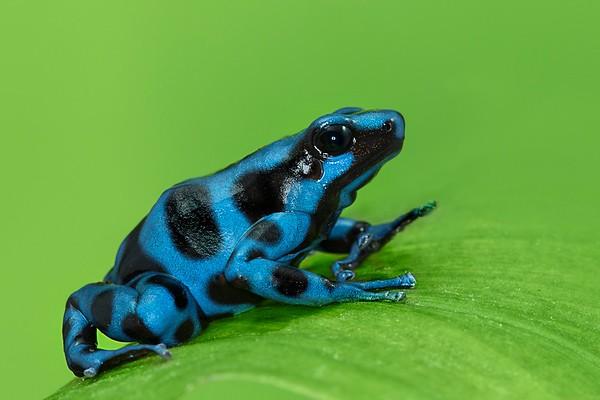 Frogscapes197_Cuchara_5632b_062514_200617_5DM3L