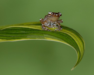 Frogscapes196_Cuchara_stacked1