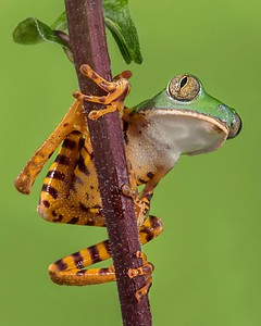 Frogscapes131_Cuchara_5797b_071115_175359_7D2L