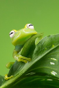 Frogscapes102_Cuchara_5595b_052014_112309_5DM3L