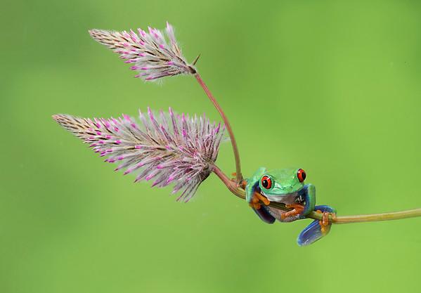 Frogscapes192_Cuchara_1475_053014_124137_5DM3L