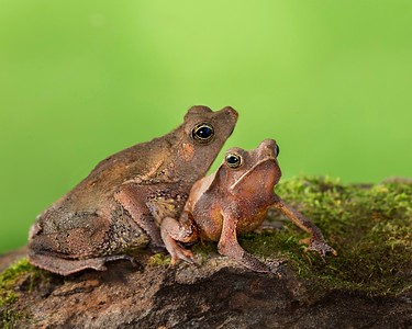 Frogscapes193_Cuchara_4795_062414_113924_5DM3L