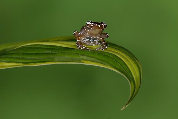 Frogscapes194_Cuchara_4838_062414_115023_5DM3L