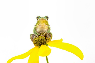 Frogscapes275_Cuchara_7084_081017_213348_5D Mark III