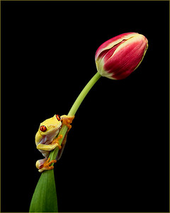 Frogscapes280_Cuchara_2675b_040615_195147_5DM3L