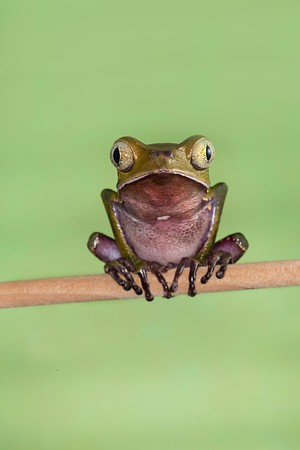 Frogscapes206_Cuchara_7405_100614_152506_5DM3L