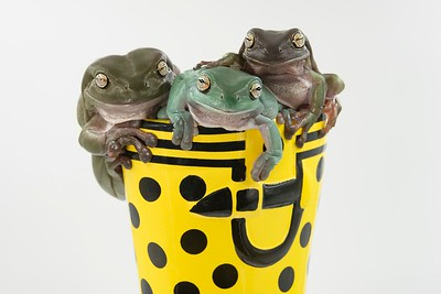 Frogscapes279_Cuchara_5960_083117_215145_S7iiT