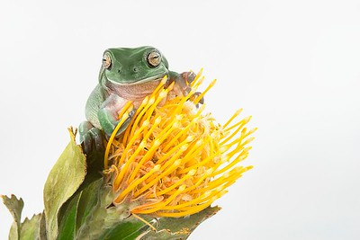 Frogscapes276_Cuchara_5793_083117_211846_S7iiT