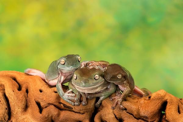 Frogscapes310_Cuchara_6793_090317_211527_SA7iiT