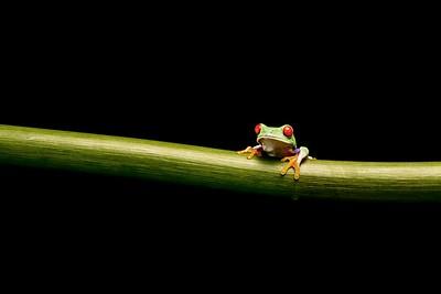 Frogscapes314_Cuchara_9459_090117_181046_5DM3L