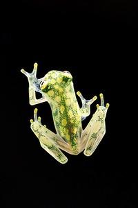 Frogscapes312_Cuchara_9080_090117_173925_5DM3L